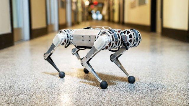 Компания MIT презентовала робота-гепарда Mini Cheetah