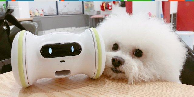 С роботом Varram Pet домашние питомцы не будут скучать в одиночку