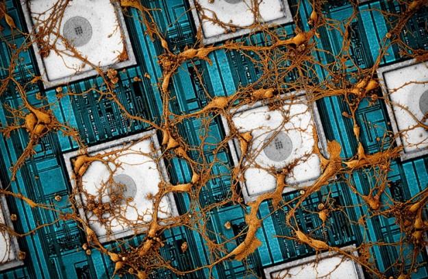 Samsung предложила «скопировать и вставить» мозг в нейроморфные чипы